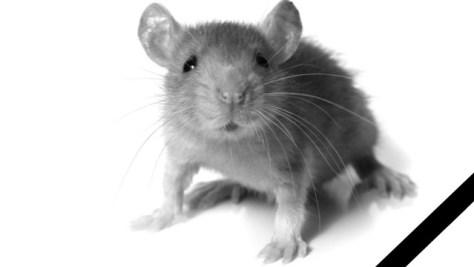 Прощай, мыша