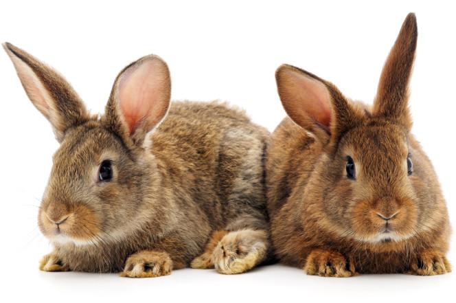 Создаём RabbitMQ кластер