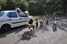 No caminho dá pra se divertir bastante com macacos.