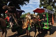 Na saída do Taj rolou uma passeada de camelo eheheheh
