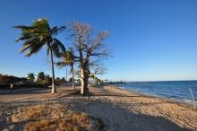 Embondeiros na beira da praia, só podia ser em Moçambique, né?