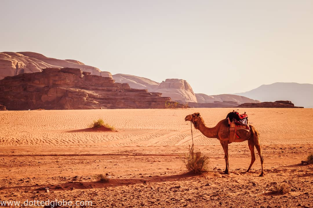 Desert c&ing in a Bedouin tent in Wadi Rum & Desert camping in a Bedouin tent in Wadi Rum - DOTTED GLOBE