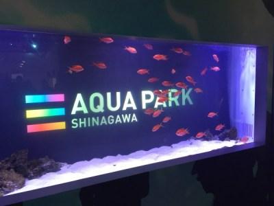 『アクアパーク品川』都心の水族館でイルカショーを堪能しました