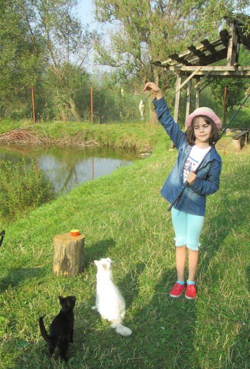 catinca_pisici_pește