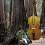 Lemur Music
