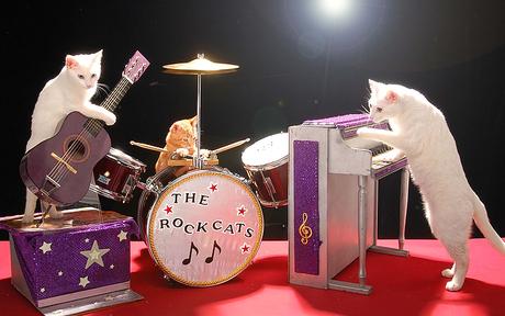 102309_voc_rockcats_half.JPG.jpeg