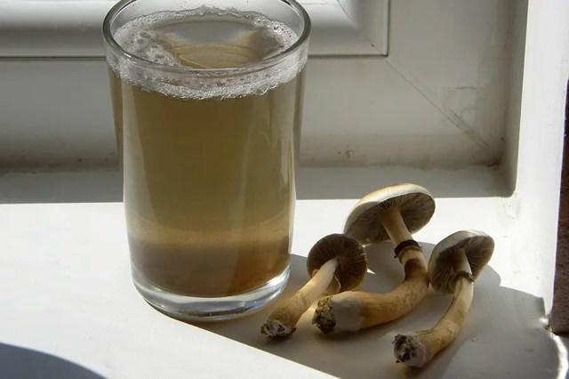 DoubleBlind: Mushroom Tea. In this article, Doubleblind  examines both shrooms and acid