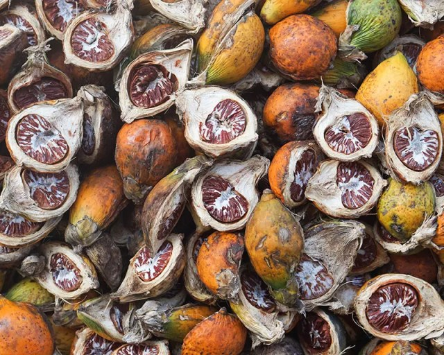 DoubleBlind: Image of pile of areca nuts, some cut in half. In this article, DoubleBlind explores the top legal psychoactive plants in the United States and Canada.