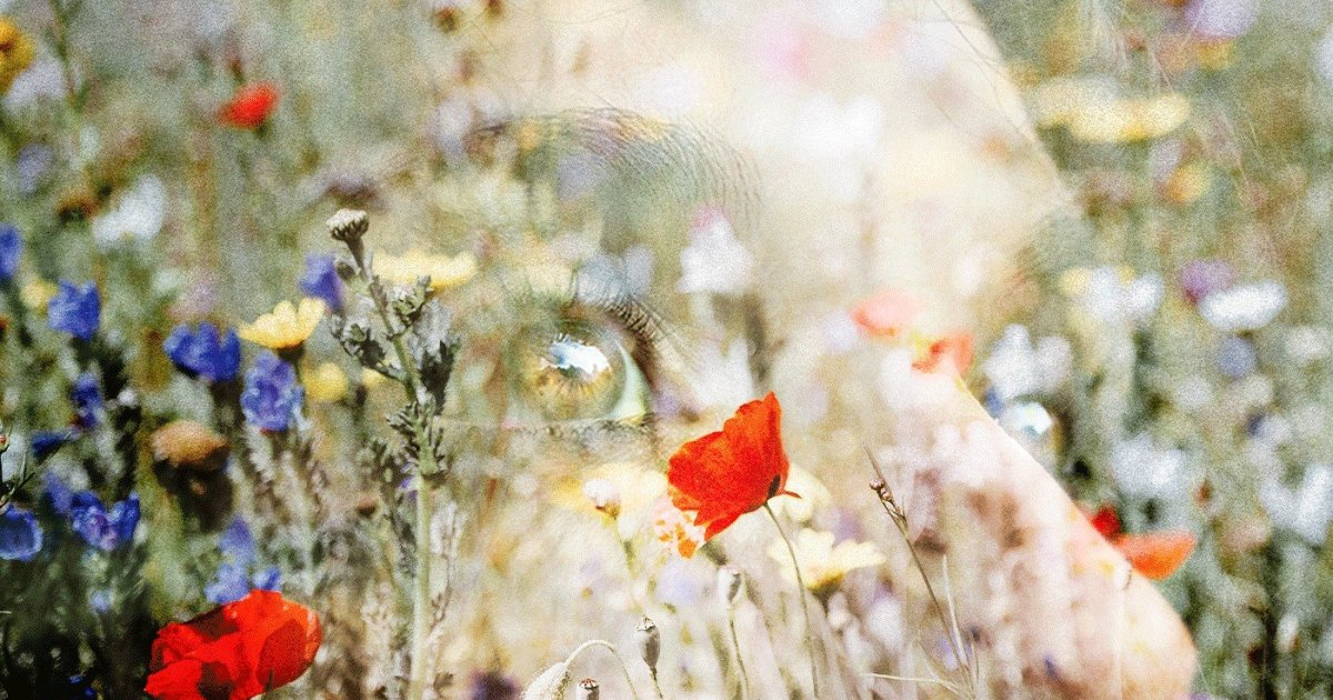 DoubleBlind: Image of woman's eyes behind field of wild flowers. In this article, DoubleBlind explores the top legal psychoactive plants in the United States and Canada.