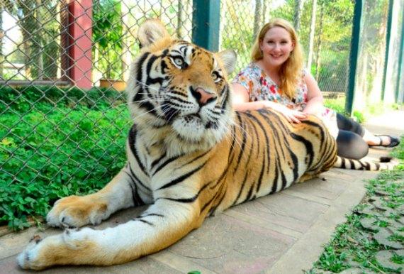Tigerbig-bg
