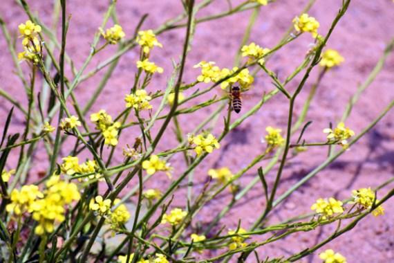 Bee_Mustard_DoubleChinDiary