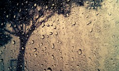 Those innocent drops of rain falling from the sky never know the thousand ways in which they may shine.