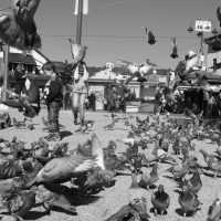 Attack Of The Pigeons