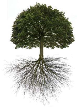 New Life: Rooted, Built-up & Established in Him - Doubtless Living