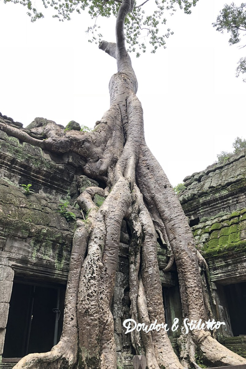 Ta Phrom Angkor 1