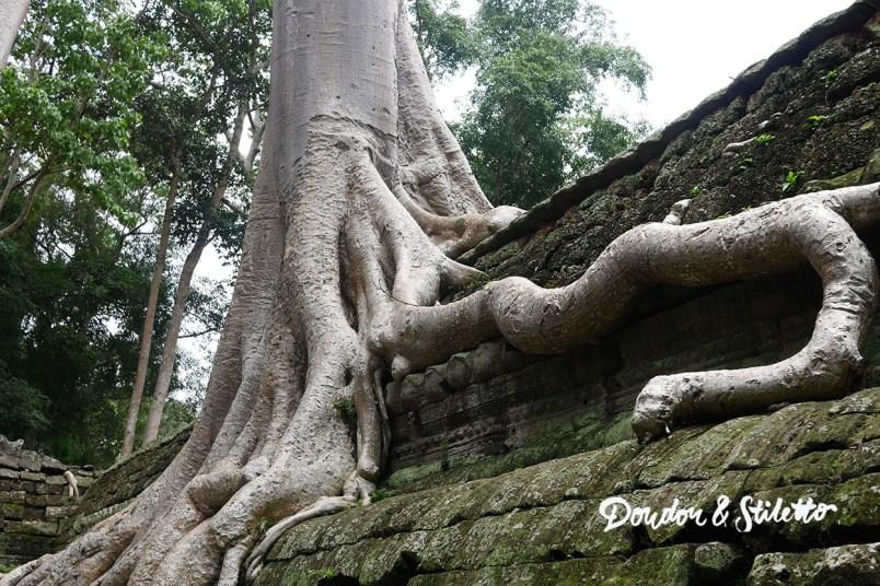 Ta Phrom Angkor 7