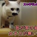 ズボラに成長した紅一点の猫フク姫(面白い&可愛い猫)