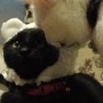 猫専用ガチャ「ねこくまちゃん」(面白い&可愛い猫)