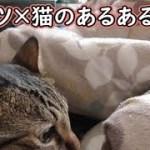 コタツと猫で生じた、小さ過ぎる悩みと疑問(面白い&可愛い猫)