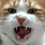 超能力を身につけたので猫に使ったら驚きの結果に大笑い♥♥猫との会話を楽しむ動画 Conversation with a talking cat