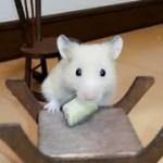ハプニング!ダイニングテーブルにペレットを置くと…!?おもしろ可愛いハムスターI bought a dining table for a Funny hamster