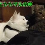 飼い主が寝るのを待っている猫ズ(面白い&可愛い猫)