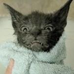 【感動実話】食道に大量の異物がある状態で発見された子猫。