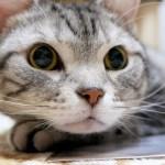 目まぐるしく変わる表情が可愛い 壁紙シールと猫