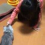 可愛い妹と可愛いマンチカンの子猫、初対面。