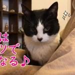 猫おむすびさんのこたつの使い方がかわいい&いわしの梅しそフライ定食