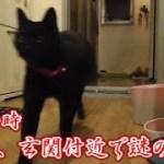 丑三つ時に玄関前で鳴き続ける、黒猫ビター(面白い&可愛い猫)