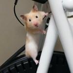 驚き!ついにエアコンの上まで登ったハムスター!おもしろ可愛いハムスターFunny Hamster finally climbed up to the air conditioner!