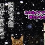 初めて大雪を目の当たりにした猫達の反応(面白い&可愛い猫)