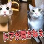 どうしてもドアが開けられなくてジタバタする猫が可愛いwww