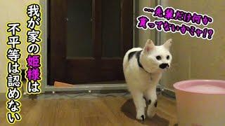 オヤツの存在に気付いた瞬間の猫フク姫(面白い&可愛い猫)