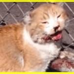 【感動】高速道路のフェンスに瀕死の状態でしがみつく子猫・・レスキュー隊さえ救出を諦めたが、たった一人その男性だけは諦めなかった!【世界が感動!涙と感動エピソード】