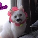猫専用ガチャ『ねこフラワーちゃん』(面白い&可愛い猫)