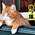 👀【感動 涙腺崩壊 猫】帰らない祖父母をいつまでも玄関で待ってる猫・招き猫ちゃんねる