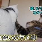 じゃれ合いを続けたい猫・やめたい猫(面白い&可愛い猫)
