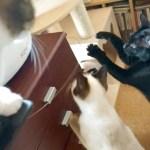 偶然から生まれた猫のおもしろい遊び