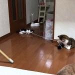 楽しそうに綱引きする子猫がかわいい