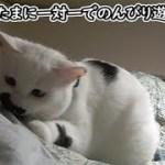 珍しく猫フク姫に遊んでもらえた飼い主(面白い&可愛い猫)