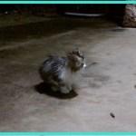 【感動】嵐の夜、ずぶ濡れで助けを求めていた子猫。1時間以上辛抱強く待つと、ついに心を開き…【世界が感動!涙と感動エピソード】