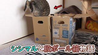 やっぱり頭を使うのが苦手だった、猫シシマル(面白い&可愛い猫)
