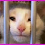 【感動】保護施設でひとりぼっち…不安で悲し気な表情をした猫はある男性と出会い、その1週間後…【世界が感動!涙と感動エピソード】