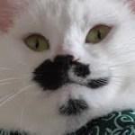 猫フク姫はやはり…どんくさかった2(面白い&可愛い猫)
