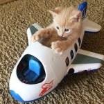 「猫かわいい」 すごくかわいい子猫 – 最も面白い猫の映画 #122