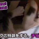 子猫フク姫、未公開映像【No.7】(面白い&可愛い猫)