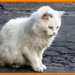 【感動】過酷な生活環境から心を閉ざし凶暴化した野良猫…心優しい女性から愛情を注がれ続け数か月後…【世界が感動!涙と感動エピソード】
