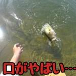 すごい口の魚が釣れた…